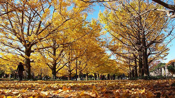 昭和記念公園・レインボープールの駐車場!混雑時間はいつ?
