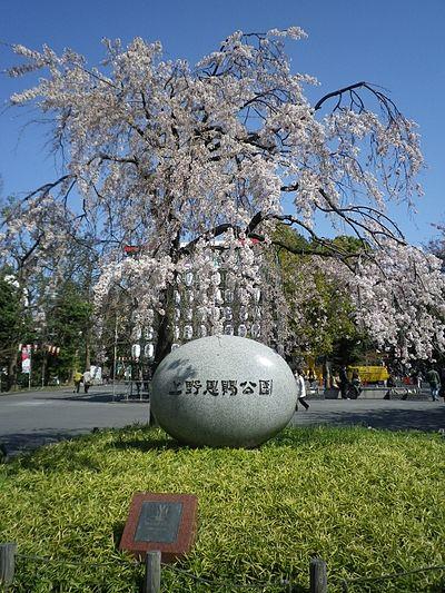 上野恩賜公園のアクセス&周辺の駐車場!予約できる安いとこは?