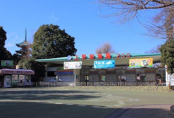 上野動物園のアクセス&周辺の駐車場!予約できる安いとこは?